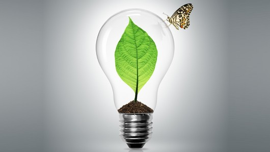 power-plant-photosynthesis-2